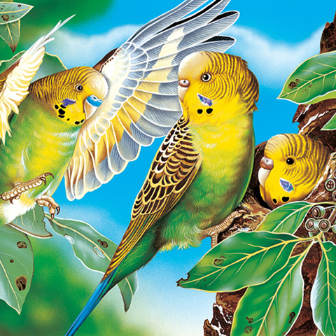 Australia Post Pre Stamped Envelope Budgies Illustration